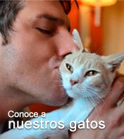 Conoce a nuestros gatos